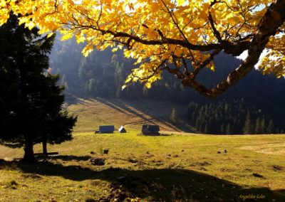 Bergahorn 400x284 - Naturschönheiten