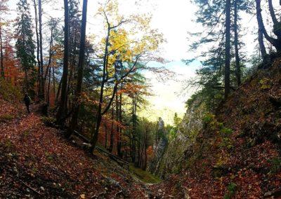 Herbst wanderung 400x284 - Naturskönheter