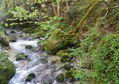 Wasserloch 6 400x284 - Hikes